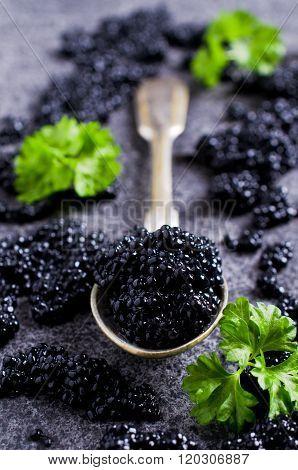 Black Caviar In The Spoon