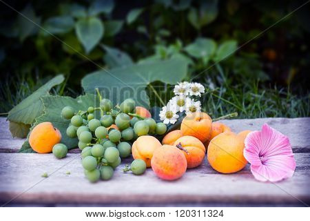 Grapes, Apricots, Daisys And Mallow On Wooden Table