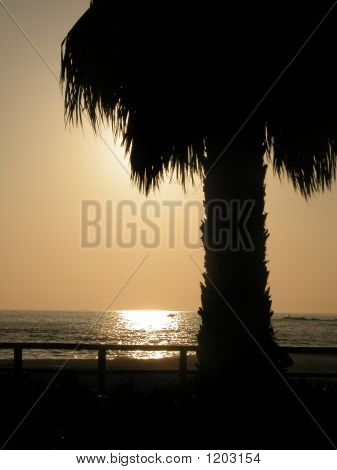 Palm Tree At Beach Sunset