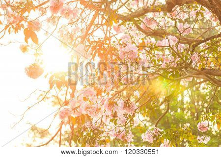Sunlight Through Pink Trumpet Flower