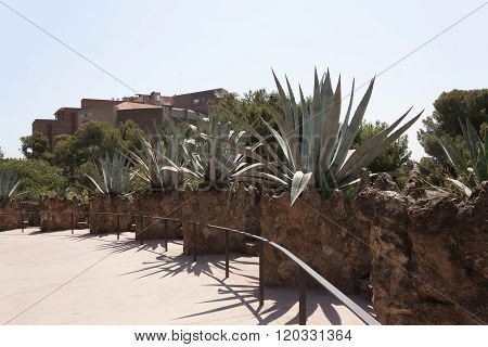 Alley With Cacti