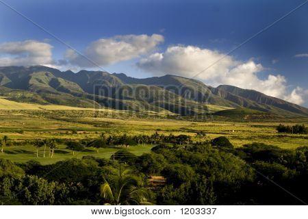 Maui Hillside