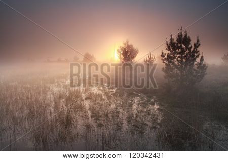 Foggy Sunrise On Wild Moor
