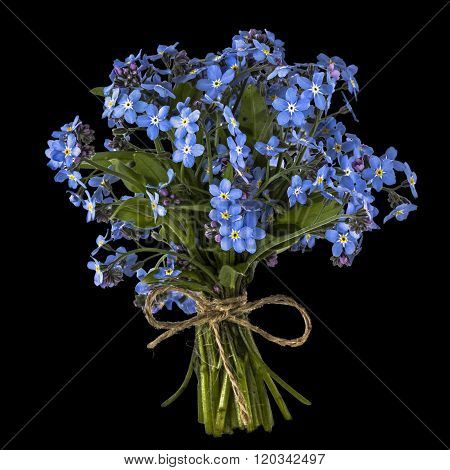 Bouquet Of Blue Forget-me-not, Isolated On Black Background