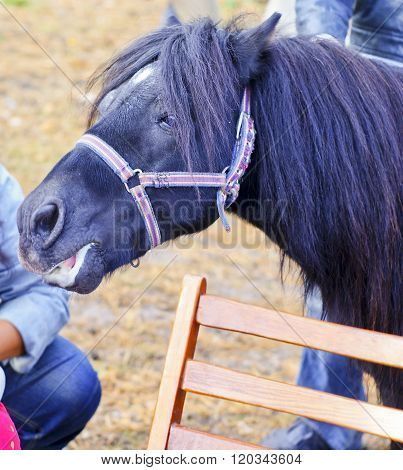 small black pony with long mane standing next to the bench