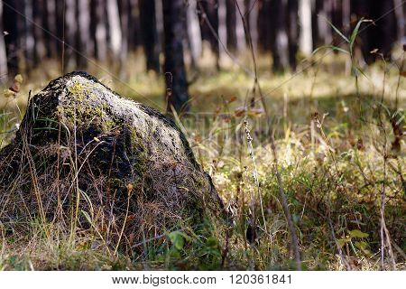 A Boulder Covered With Moss.