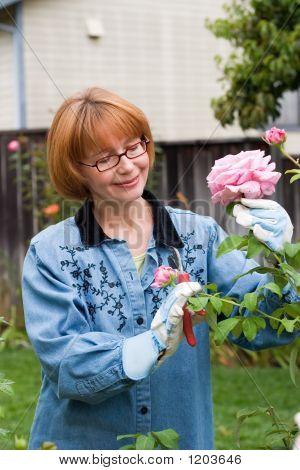 Frauen cut Roses im Garten
