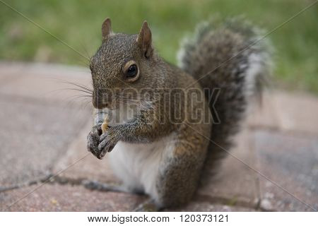A chipmunk is eating crackers