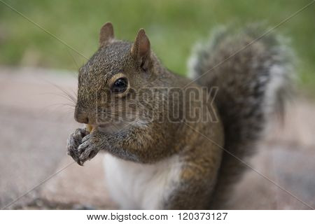 A chipmunk is holding crackers