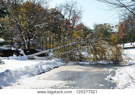 tree fallen down the road in snow storm