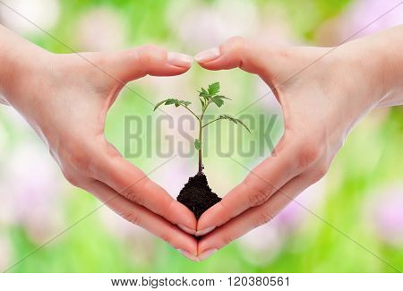 Environmental Awareness And Protection Concept