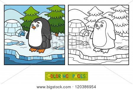 Coloring Book (penguin And Background)