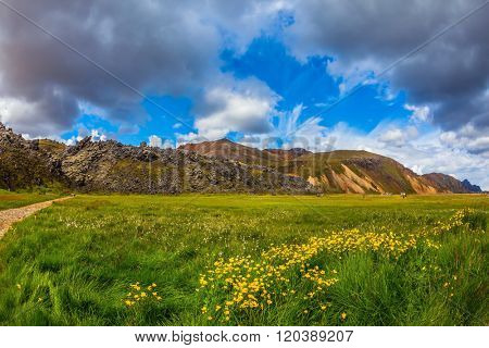 Green grass among thermal sources. The picturesque valley in national park Landmannalaugar. Summer in Iceland