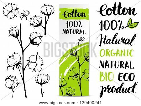 Set of vector hand draw cotton plant