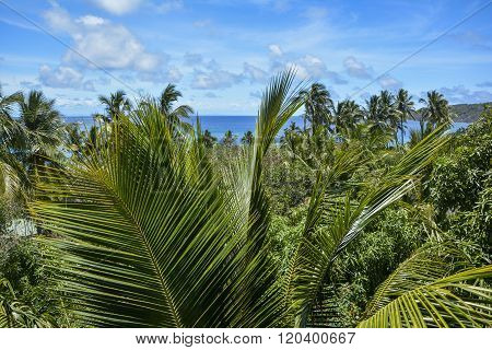 Beautiful palm tree view over Mantaray Island, Fiji