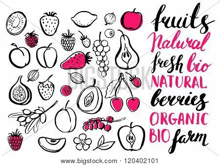 Vector handwritten food elements with rough edges