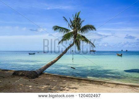 A beautiful beach with palm tree at Koh Tao, Thailand
