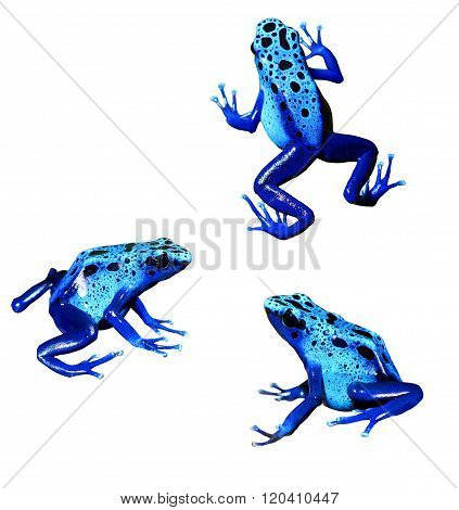 Colorful Blue Frog Dendrobates Tinctorius Isolated