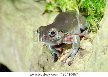 Colorful green plump frog on a rock in natural environment