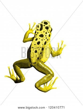 Colorful yellow frog over white background. Isolated