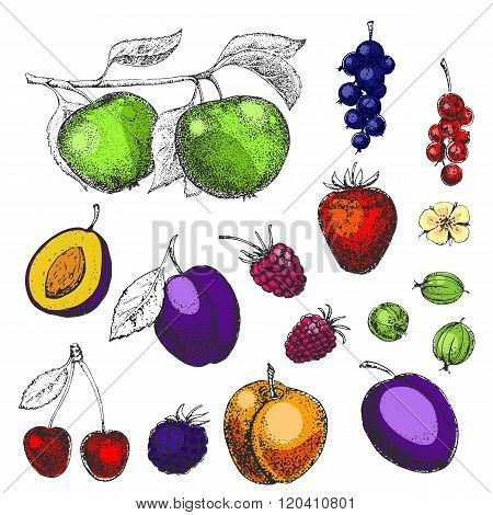 Hand drawn vector berries and fruits