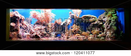 Tropical marine aquarium with anemones. Coral reef display fragment.