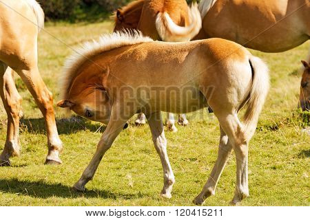 Brown And White Foal