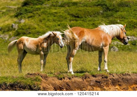 Brown And White Mare With Foal
