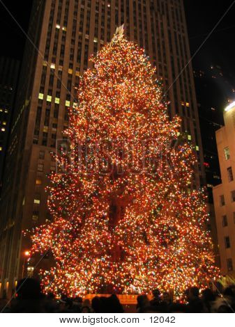 Christmas Tree In Rockefeller Center