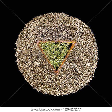 Dried Hemp Leaves In A Triangular Ceramic Saucer