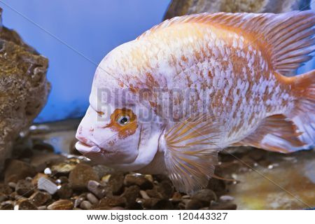 Underwater fishes swimming