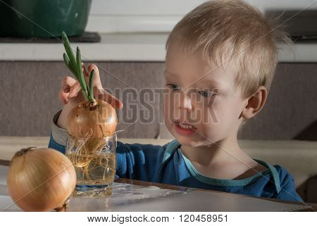 Little Boy With Two Bulbs Of Fresh Onions