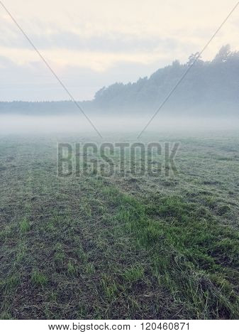 Misty Field With Freshly Mown Grass