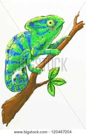 Isolated Chameleon Illustration