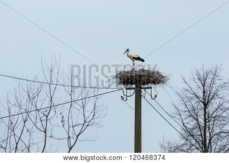 White Stork Nest On Electricity Pole In Small Village
