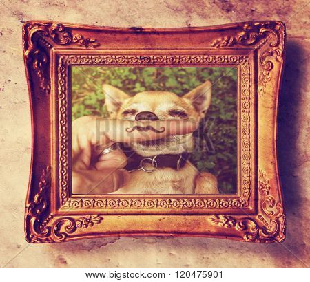 a cute chihuahua with a mustache finger in front of him done with a retro vintage instagram filter (from the mustache series) in an antique gold picture frame