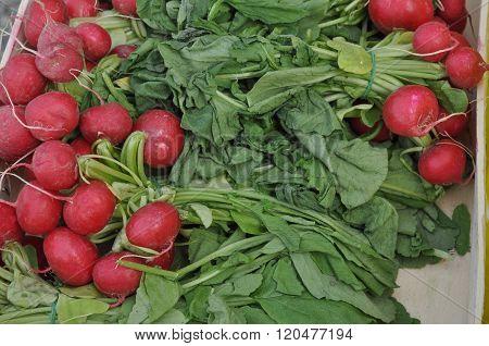 Red Radish Vegetables