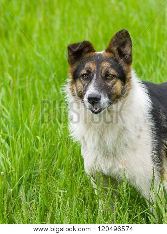 Cute mixed breed dog in the spring grass