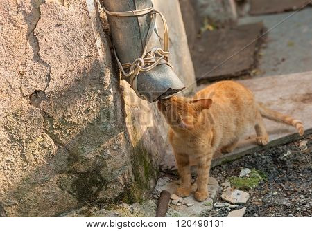 Street cat in hunting stage