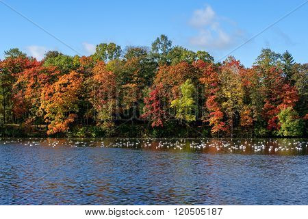 Autumnal forest near the lake. Trees with red, yellow and green leaves.