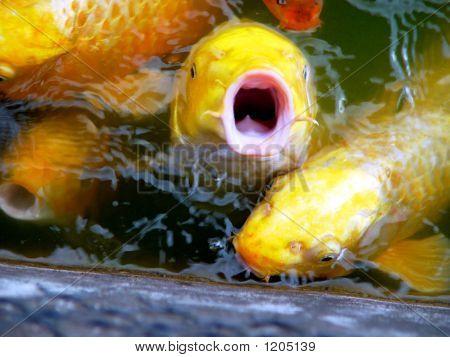 Fisch sagt Nein