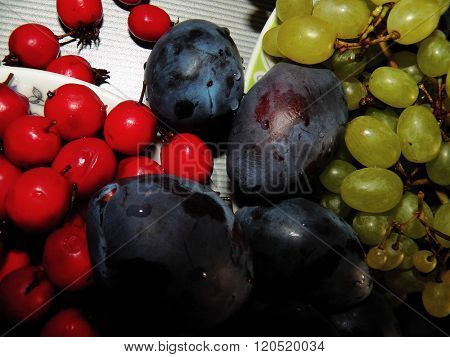 Plum, Hawthorn And Grapes