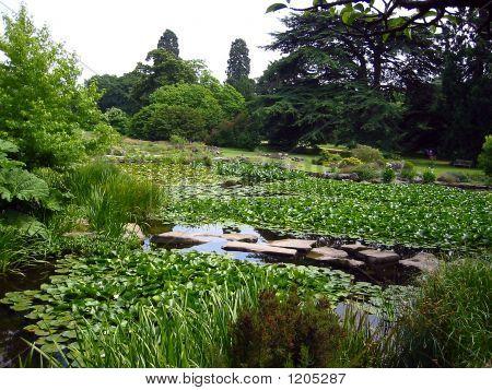 Summer Scenery, Cambridge Botanic Garden