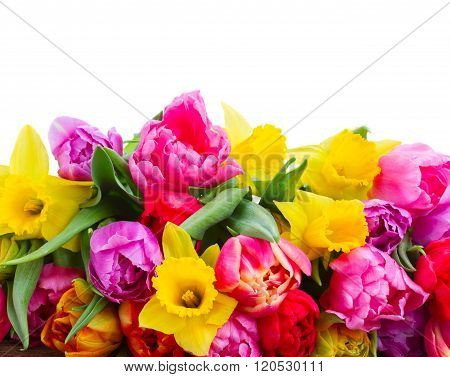 bouquet of   tulips and daffodils