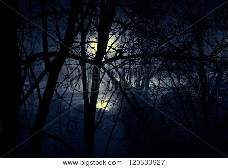 Mysterious Light In The Forest