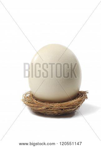 Large Egg In Bird Nest