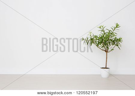 Flower In A Pot On A White Background.