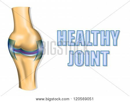 illustration of a healthy joint. the sectional view