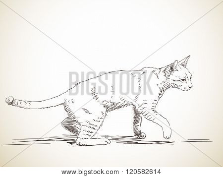 Sketch of cat walking in profile, Hand drawn illustration