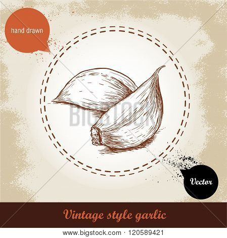 Vector hand drawn illustration with spice garlic clove isolated on grunge old background. Organic fo